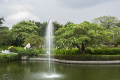 Tropical park Royalty Free Stock Images