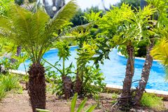 Tropical park and pool Royalty Free Stock Photo