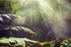 Tropical - parque de la selva en Palma, Mallorca Imagen de archivo libre de regalías