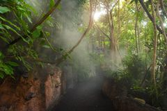 Tropical - parque de la selva en Palma, Mallorca Foto de archivo libre de regalías