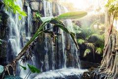 Tropical - parque de la selva en Palma, Mallorca fotografía de archivo libre de regalías