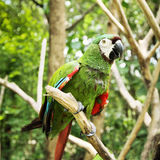 Tropical parrot Stock Images