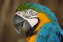 Tropical parrot Stock Photo