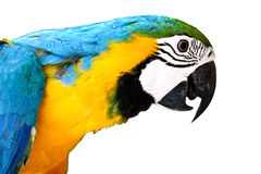 Tropical parrot Stock Image