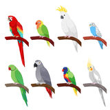 Tropical Parrot Set Isolated on White Background Stock Photo