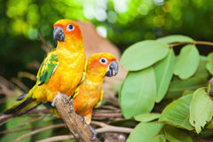 Tropical parrots Royalty Free Stock Images