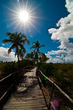 Tropical path Royalty Free Stock Photo