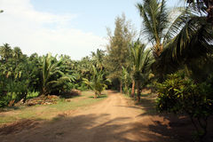 Tropical Path Stock Photography