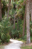 Tropical Path. A shell path winds through palm trees and saw palmetto near the Caloosahatchee River in Fort Myers Florida stock photos