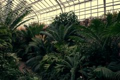 Tropical path with green tropical plants, palms and catuses at famous botanical garden in Munich stock photo