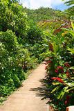Tropical pathway Royalty Free Stock Photo