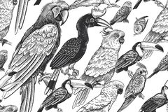 Free Tropical Pattern. Exotic Birds Parrots And Toucans. Vector. Black And White Royalty Free Stock Images - 192478309