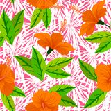 Tropical pattern with orange hibiscus flowers Royalty Free Stock Photography