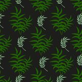 Tropical pattern palm summer green palm leaves black background. Vector exotic seamless pattern design nature textile hawaii. Tropic illustration. Jungle leaf Stock Photography