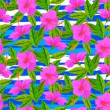 Tropical pattern with pink hibiscus flowers Stock Images