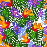Tropical pattern Stock Photos