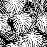 Tropical pattern 43. Seamless  monochrome tropical pattern depicting  white palm tree on a black background Royalty Free Stock Photos