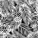 Tropical pattern, vector floral background. palm leaves seamless pattern. Abstact black leaves stock illustration