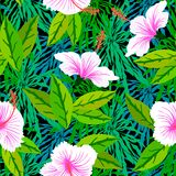 Tropical pattern with white hibiscus flowers Stock Photos
