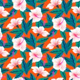 Tropical pattern with white hibiscus flowers Royalty Free Stock Images