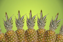 Tropical pinapples on green background royalty free stock images