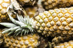 Tropical Pineapple from Amazon Market Royalty Free Stock Photos