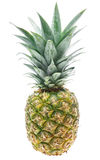 Tropical pineapple isolated Royalty Free Stock Photo