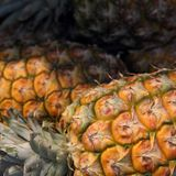 Tropical pineapples Stock Photo