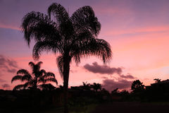 Tropical Pink and Blue Sunset Behind Royal Palm Silhouettes Royalty Free Stock Photography