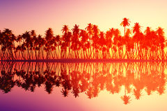 Tropical pink cloudfront. Pink cloudfront over coconut palms at tropical sunset stock illustration