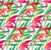Tropical pink flower seamless pattern on white background. vecto Stock Image