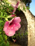 Tropical pink flower silhouetted by stone arch. Symbolizing new beginnings, hope, faith, solitude, peace, tranquility Royalty Free Stock Image