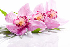 Tropical pink orchid plant stock images