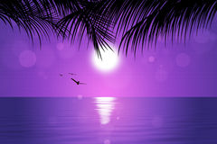 Tropical Pink Sunset Royalty Free Stock Photo