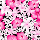 Tropical pink and white flowers seamless pattern Royalty Free Stock Images