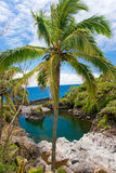 Tropical plam tree. In front of exotic swimming hole Royalty Free Stock Photography