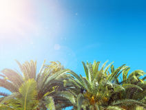 Tropical plam tree over the clear sky Stock Photos