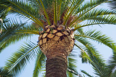 Tropical plam trees. A shot of some beautiful tropical palm trees stock image