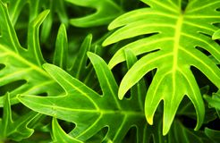 Tropical plant Stock Images