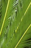 Tropical plant Royalty Free Stock Photo