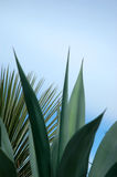 Tropical Plant Background Stock Image