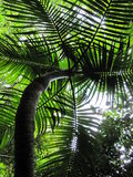 Tropical plant. Backlit by a bright sun, this was taken looking up from the forest floor Royalty Free Stock Image