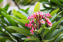 Tropical plant. Stock Photography
