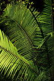 Tropical plant. Royalty Free Stock Photos