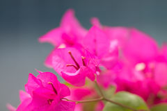 Tropical plant. Stock Photos