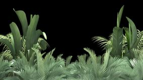 Tropical plant on an black background vector illustration
