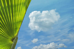 Tropical plant and blue sky Royalty Free Stock Image