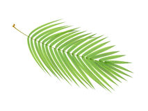 Tropical plant branch Stock Photos