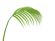 Tropical plant branch Stock Images