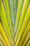 Tropical Plant Detail Royalty Free Stock Images